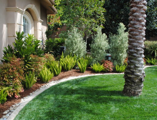 How To Find The Best Landscape Design Company In San Diego